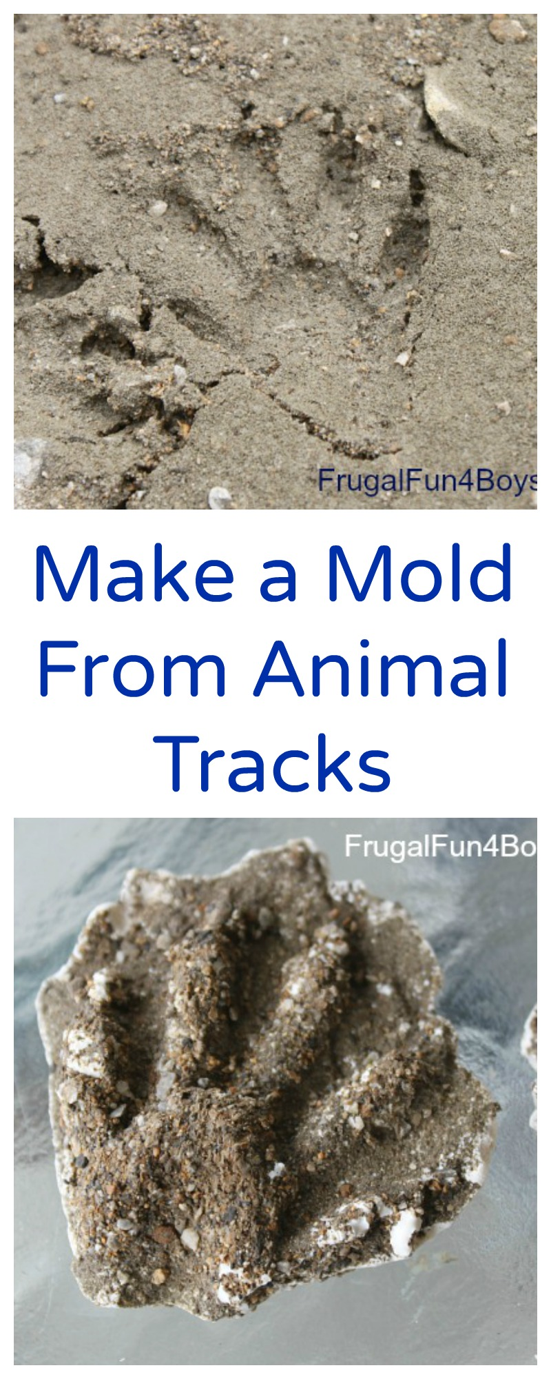 How to Make a Plaster Cast from Animal Tracks