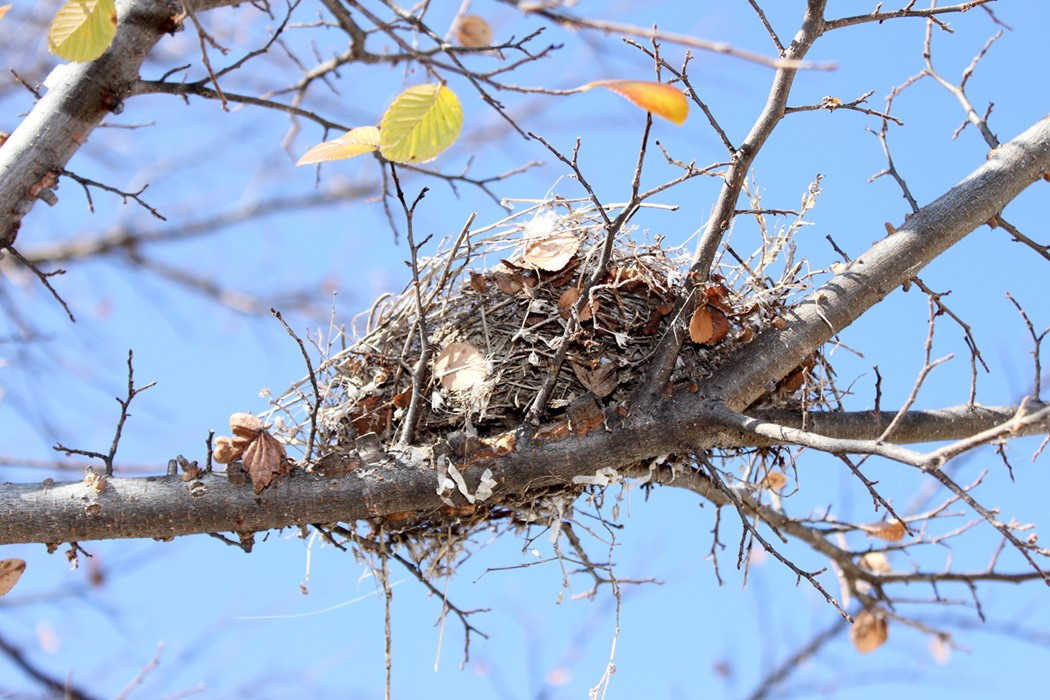 Build a Bird Nest Science Project