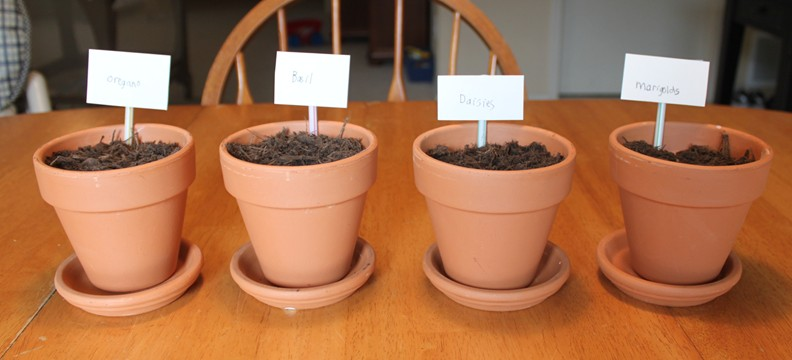 Grow Week Day 2: Indoor Herbs and Drawing Spring Trees