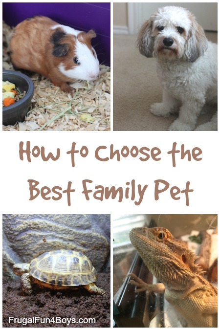 Tips for Choosing a Family Pet