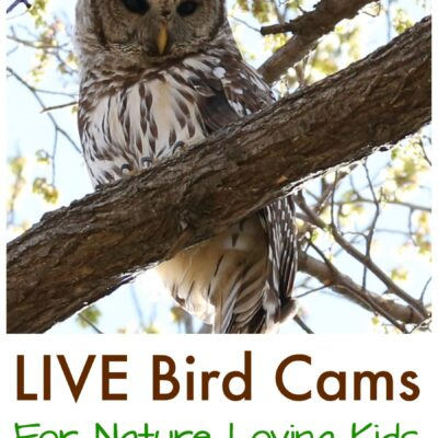 Live Bird Cams to Watch