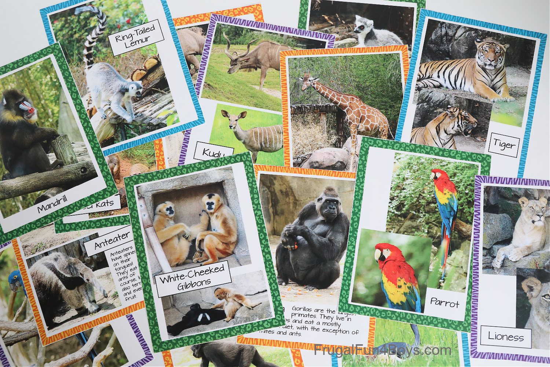 Animal Photo Cards
