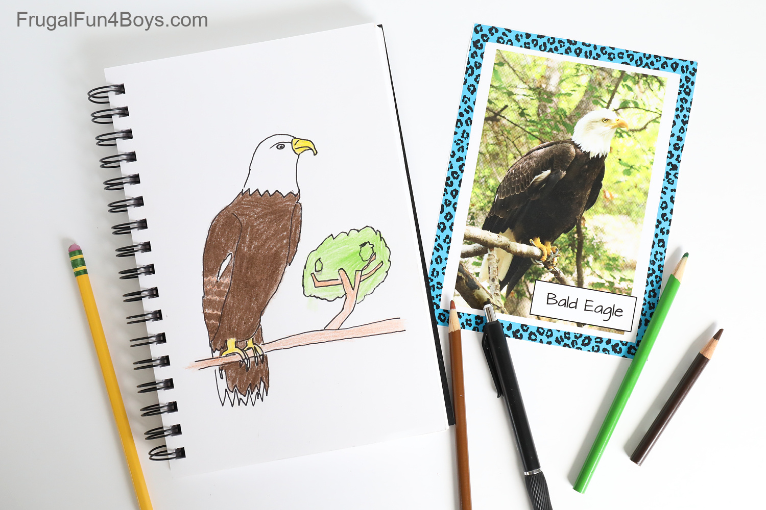 Animal Photo Cards for Drawing