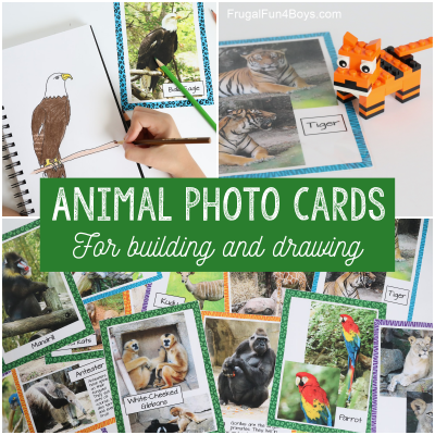 Animal Photo Cards {Drawing or Building Activity}